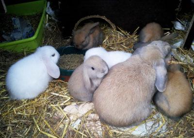 Sandaa's kaniner