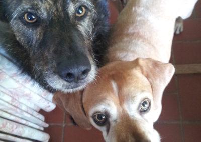 Benji & Daisy